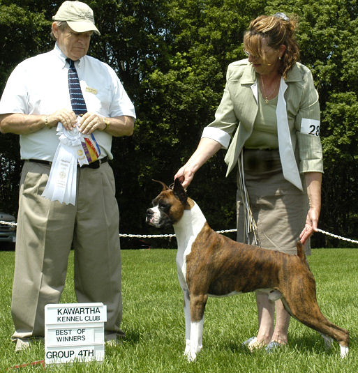 Kawartha Kennel Club 6/30/06. BB & Group 4th from the Open Dog class - 4 points. Judge Michael Shoreman.