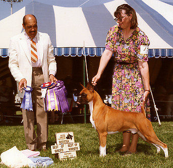 BW, Best of Breed, Oxford County Boxer Club of Canada Booster 1996. (on to a Group 3rd)